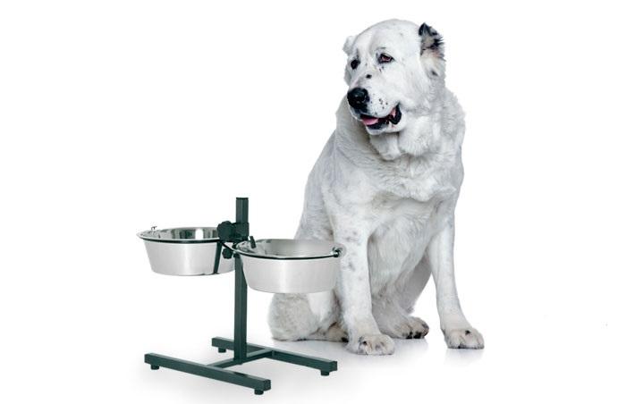 Чем кормить щенка и взрослого алабая? Рацион на день